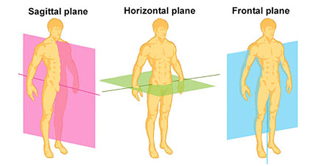 The Sagittal Plane